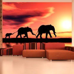 Fotótapéta - elephants: family