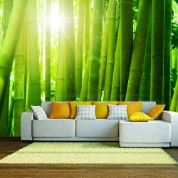 Fotótapéta - Sun and bamboo