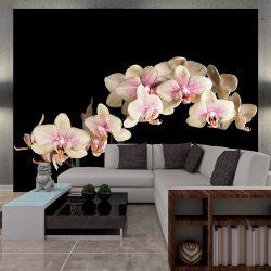 Fotótapéta - Virágzó orchidea