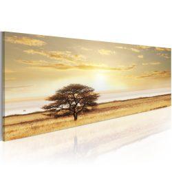 Kép - Lonely tree on savannah