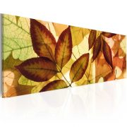 Kép - collage - leaves