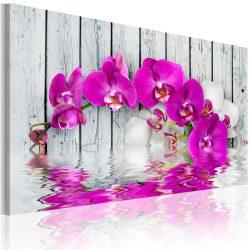 Kép - harmony: orchid
