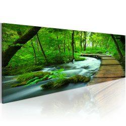 Kép - Forest broadwalk