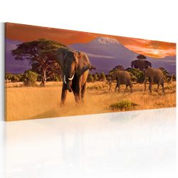 Kép - March of african elephants