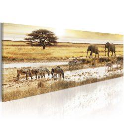 Kép - Africa: at the waterhole