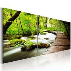 Kép - Forest Brook