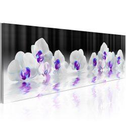 Kép -  Water Orchids