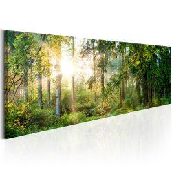 Kép - Forest Shelter