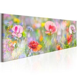 Kép - Rainbow of Morning Poppies