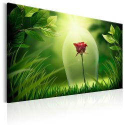 Kép - Magical Rose