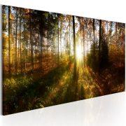 Kép - Beautiful Forest