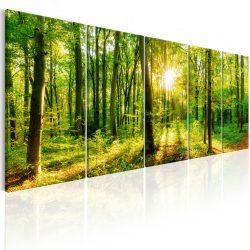 Kép - Magic Forest