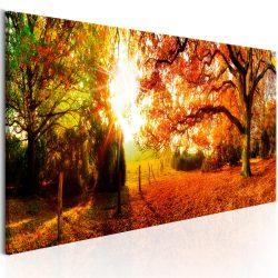 Kép - Magic of Autumn