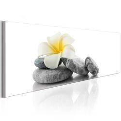 Kép - White Lotus