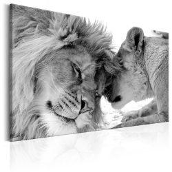 Kép - Lion's Love