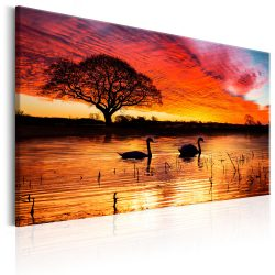 Kép - Swan Lake