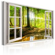Kép - Window: View on Forest