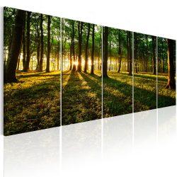 Kép - Shade of Trees I