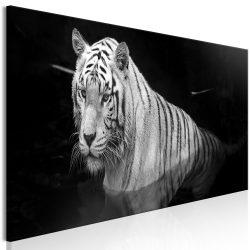 Kép - Shining Tiger (1 Part) Black and White Narrow