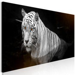Kép - Shining Tiger (1 Part) Orange Narrow