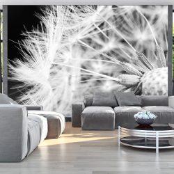 Fotótapéta - Black and white dandelion