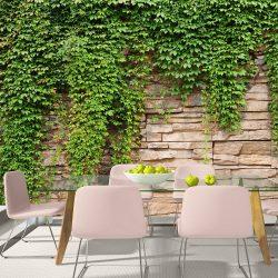 Fotótapéta - Ivy wall