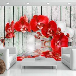 Fotótapéta - Ruby orchid