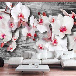 Fotótapéta - Callous orchids