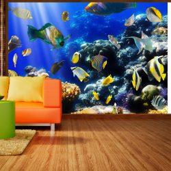 Fotótapéta - Underwater adventure