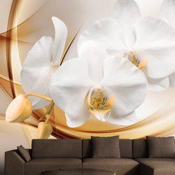 Fotótapéta - Orchid blossom