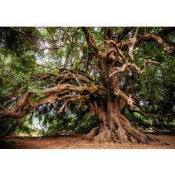Fa fotótapéta több méretben, alapanyagban