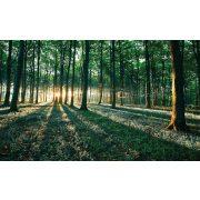 Erdő poszter, fotótapéta 2228 több méretben, alapanyagban
