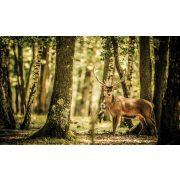 Szarvas az erdőben 2286 több méretben, alapanyagban