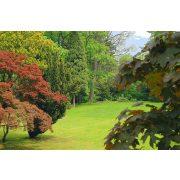 Garden poszter, fotótapéta C1-4-004P4/254x184/