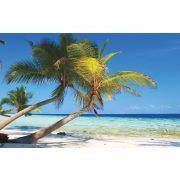 Pálmafa a tengerparton vlies poszter, fotótapéta 312x219 cm