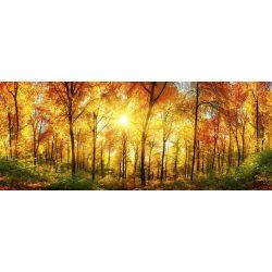 SUNNY FOREST fotótapéta, poszter, vlies alapanyag, 375x150 cm