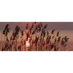 REED ON LAKE fotótapéta, poszter, vlies alapanyag, 375x150 cm