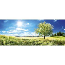 BLOSSOM TREE fotótapéta, poszter, vlies alapanyag, 375x150 cm