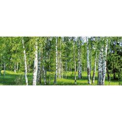 BIRCH GROW fotótapéta, poszter, vlies alapanyag, 375x150 cm