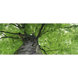 TREETOP fotótapéta, poszter, vlies alapanyag, 375x150 cm