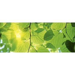GREEN LEAVES fotótapéta, poszter, vlies alapanyag, 375x150 cm