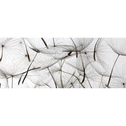 DANDELION SEEDS fotótapéta, poszter, vlies alapanyag, 375x150 cm