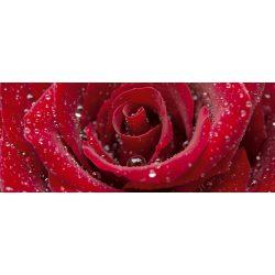 RED ROSE fotótapéta, poszter, vlies alapanyag, 375x150 cm
