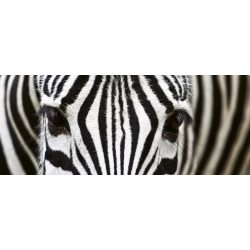 ZEBRA fotótapéta, poszter, vlies alapanyag, 375x150 cm