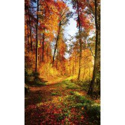 FOREST WALK fotótapéta, poszter, vlies alapanyag, 150x250 cm