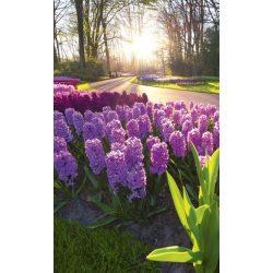 HYACINT FLOWERS fotótapéta, poszter, vlies alapanyag, 150x250 cm