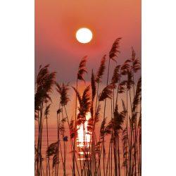 REED fotótapéta, poszter, vlies alapanyag, 150x250 cm