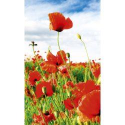 RED POPPIES fotótapéta, poszter, vlies alapanyag, 150x250 cm