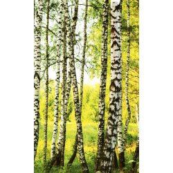 BIRCH FOREST fotótapéta, poszter, vlies alapanyag, 150x250 cm