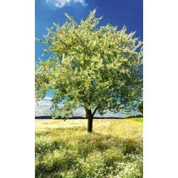 BLOSSOM TREE fotótapéta, poszter, vlies alapanyag, 150x250 cm